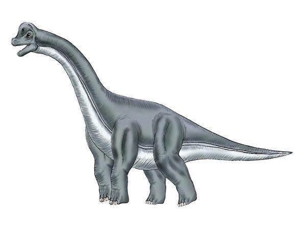 ブラキオサウルス 特徴